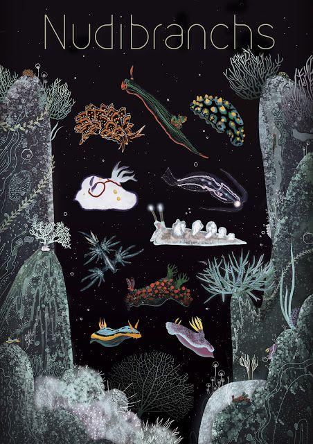 IL·LUSTRACIÈNCIA: Nudibranch Species - Svabhu Kohli