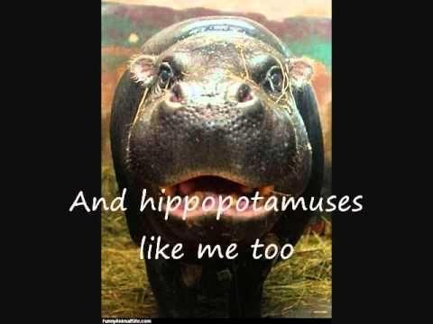 i want a hippopotamus for christmas lyrics - All I Want For Christmas Is A Hippopotamus Ringtone