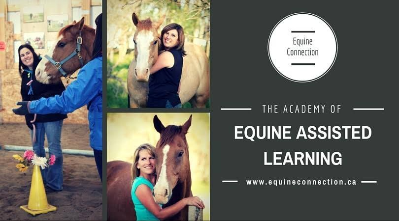 Organizations are looking for qualified Equine Assisted Learning facilitators. Will you be one?