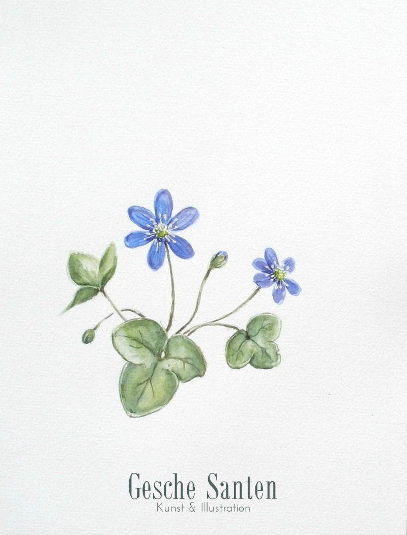 Leberblümchen 1 - Aquarell -2016 (24x32cm)