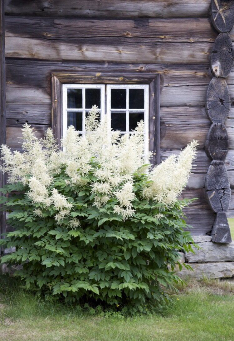 Find this from swedish blog. Have to know that plant this is.