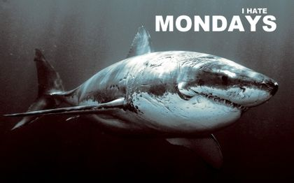 quotes hate sharks monday 1727x1080 wallpaper_www.wallpapername ...