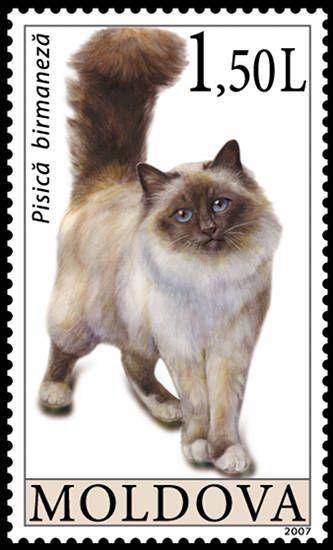 Moldova Cat Stamp Birman Cat Cat Stamp Cats