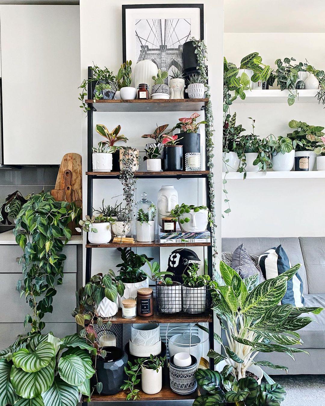 vertical garden wall shelf indoor living room