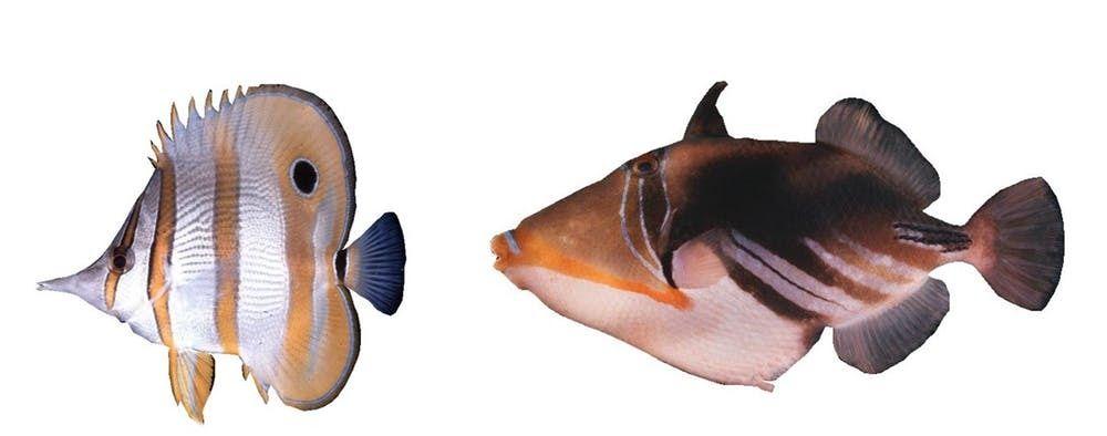 Paling Hits 30 Gambar Ikan Nemo Kartun Hitam Putih Teka Teki