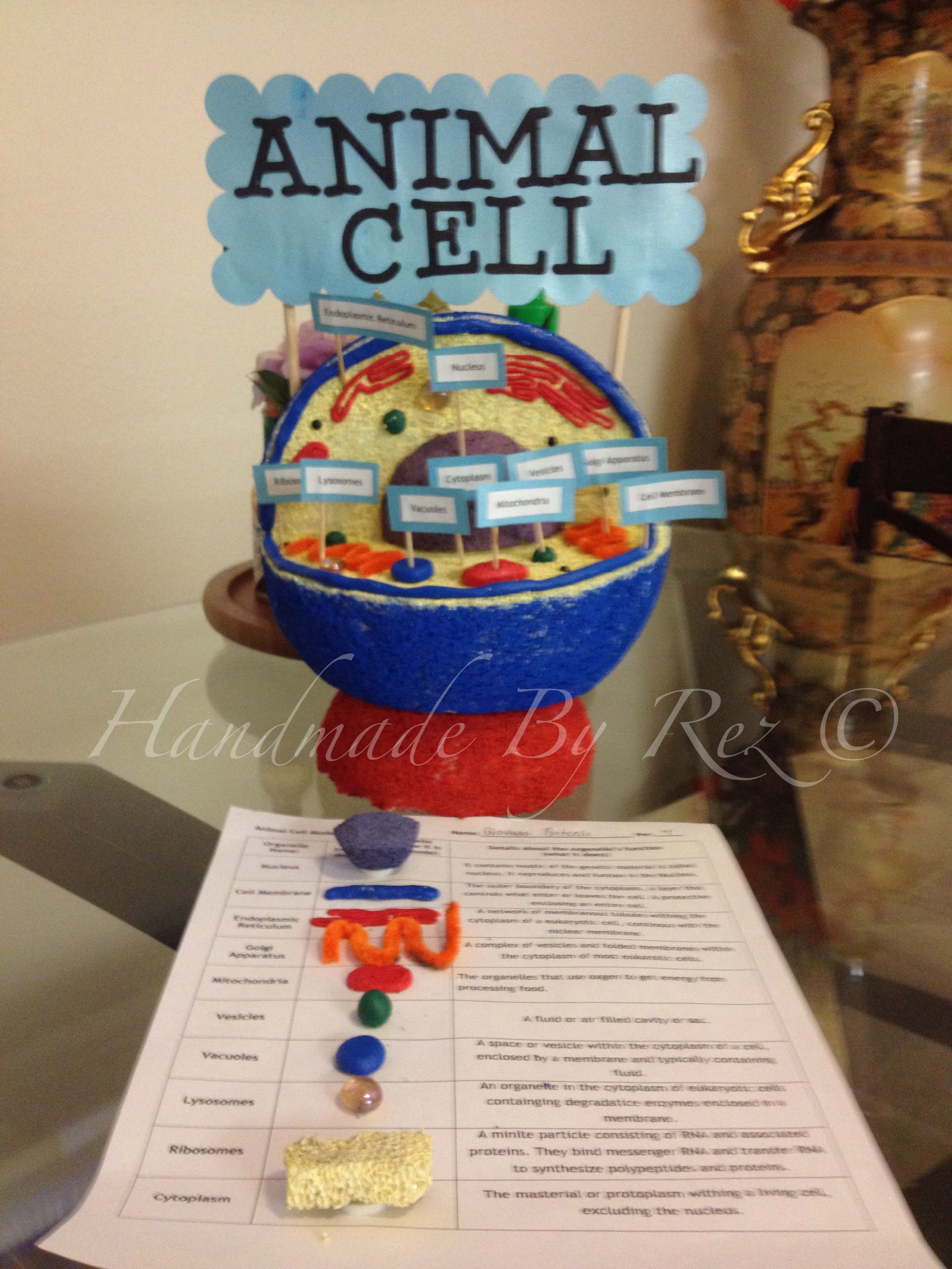 This Is A Good Example For Animal Cell Project Science Simple Diagram Labeled Kids Plant And