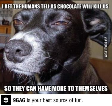 Humans Are Selfish Funny Dog Pictures Funny Animal Memes Animal Memes