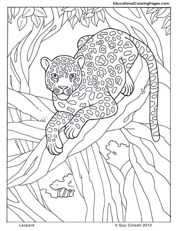 Download or print this amazing coloring page: leopard