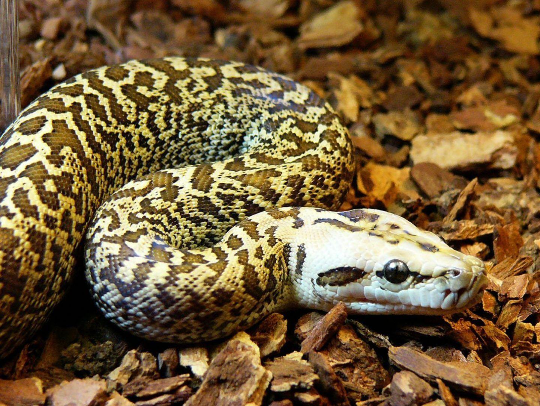 serpiente - Buscar con Google