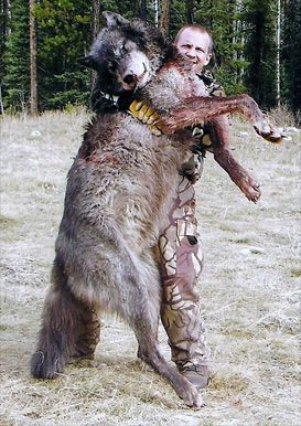 Timberwolf Size | www.pixshark.com - Images Galleries With