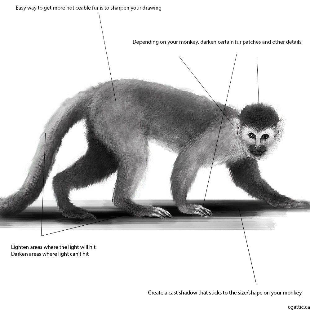 Realistic Monkey Drawing In 4 Steps With Photoshop Monkey Drawing Drawings Animal Drawings