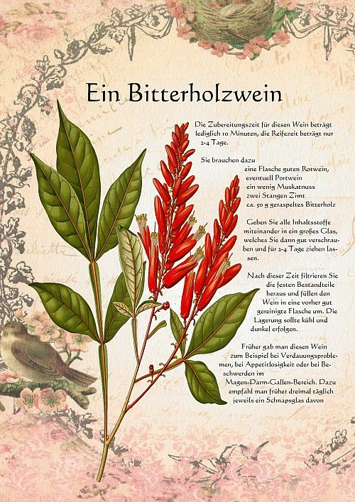 Ein Bitterholzwein Mit Bildern Krauter Pflanzen Heilpflanzen Pflanzen