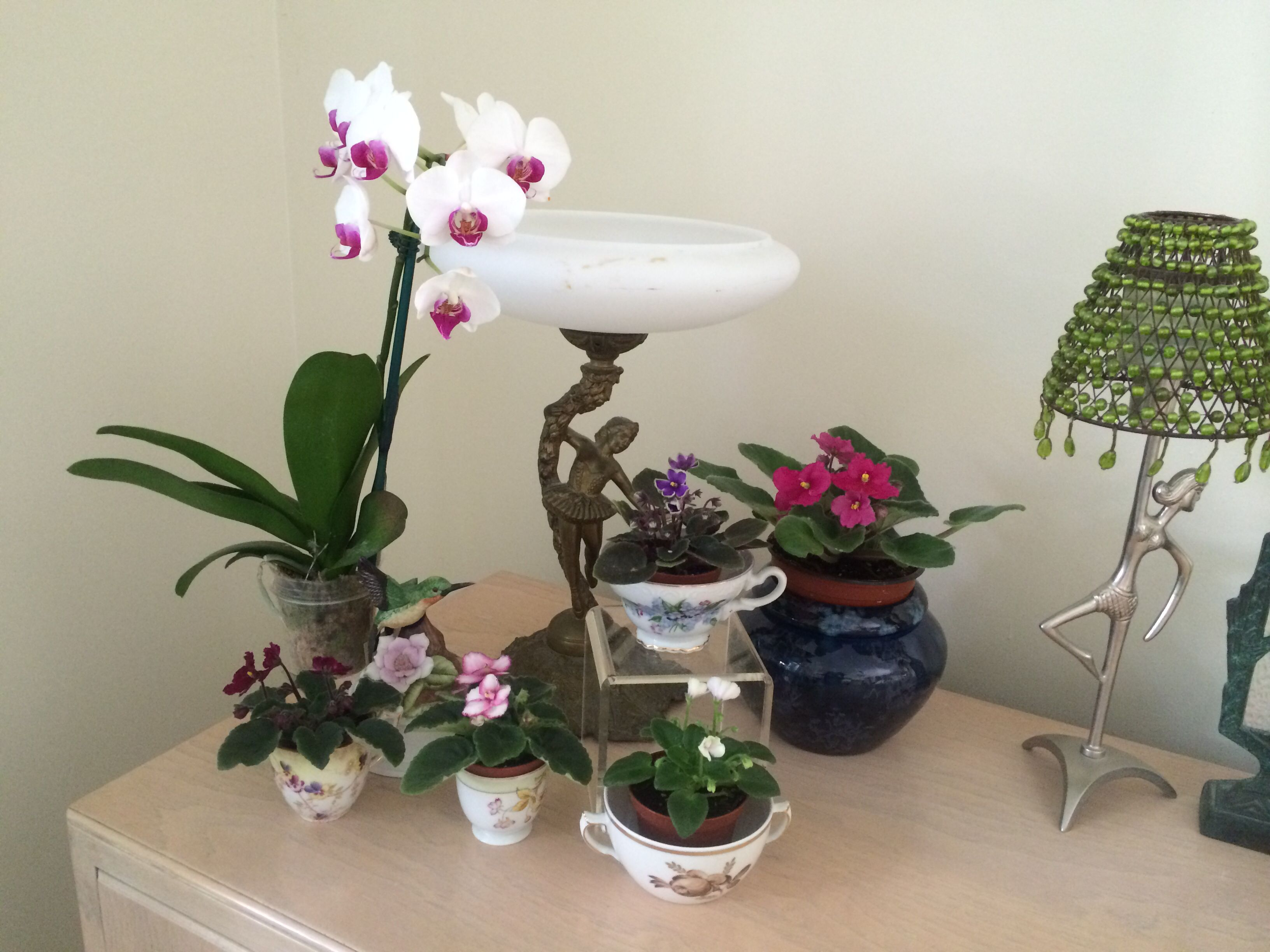 Simple use if different containers for blooming African Violets.