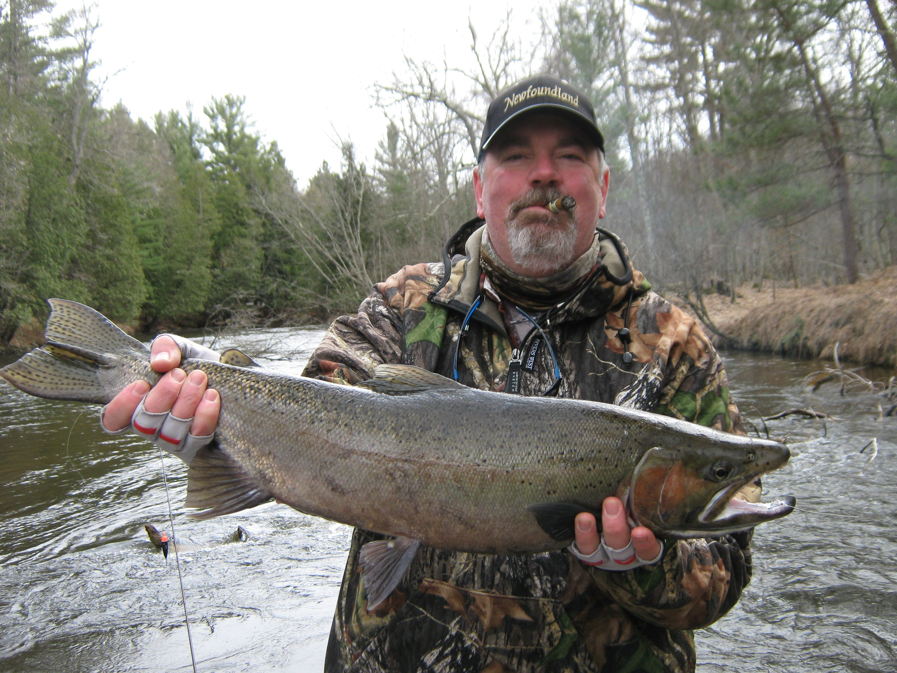 PM River - we went 5 for 8 on steelhead today along with a dozen trout on the line. Thanks to Jeff Topp and Outcast River Guides - April 2015.