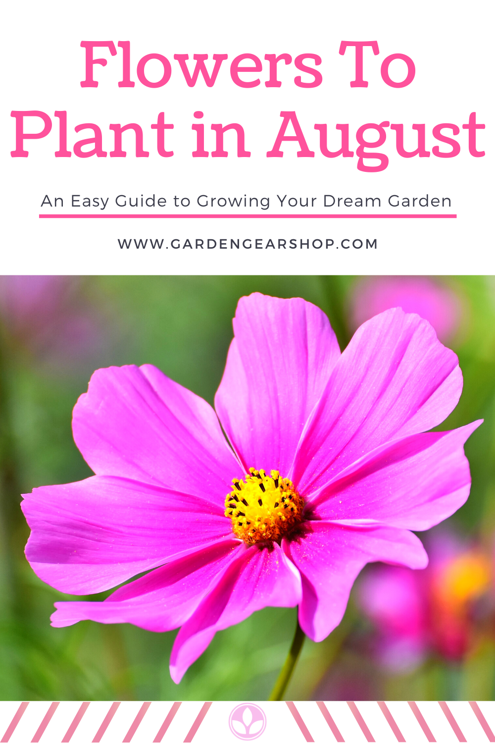 Flowers To Plant In August Cosmos In 2020 Planting Flowers Plants August Flowers