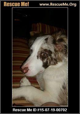 Tennessee Australian Shepherd Rescue ― ADOPTIONS ― RescueMe