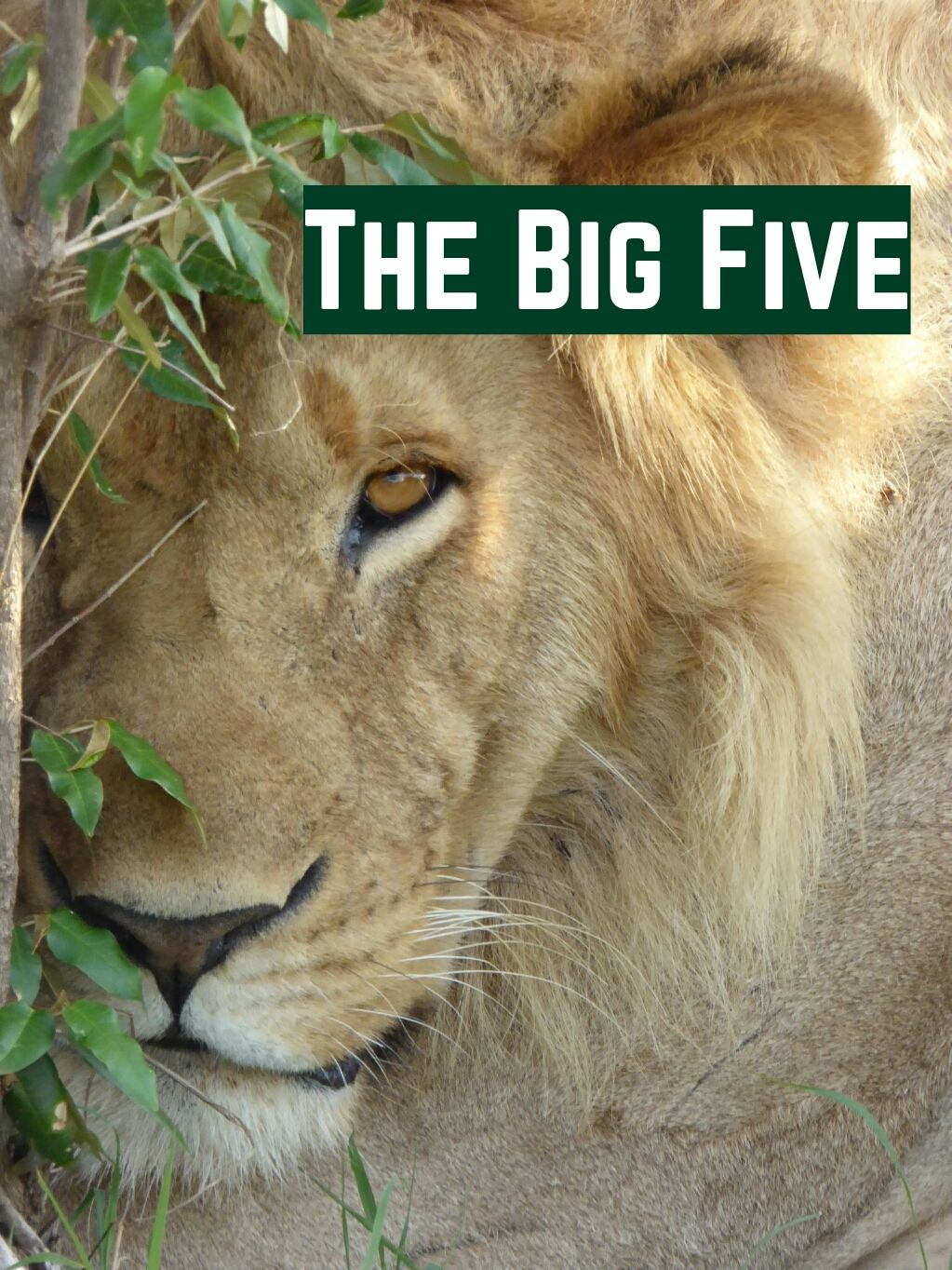 Big Five Learn about the Animals you hopefully meet on