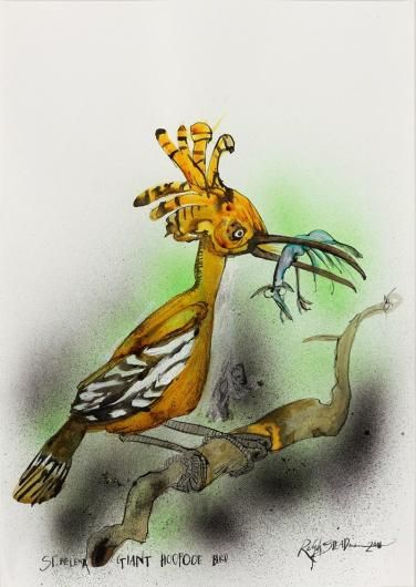 The St Helena giant hoopoe is presumed to have become extinct due - what is presumed