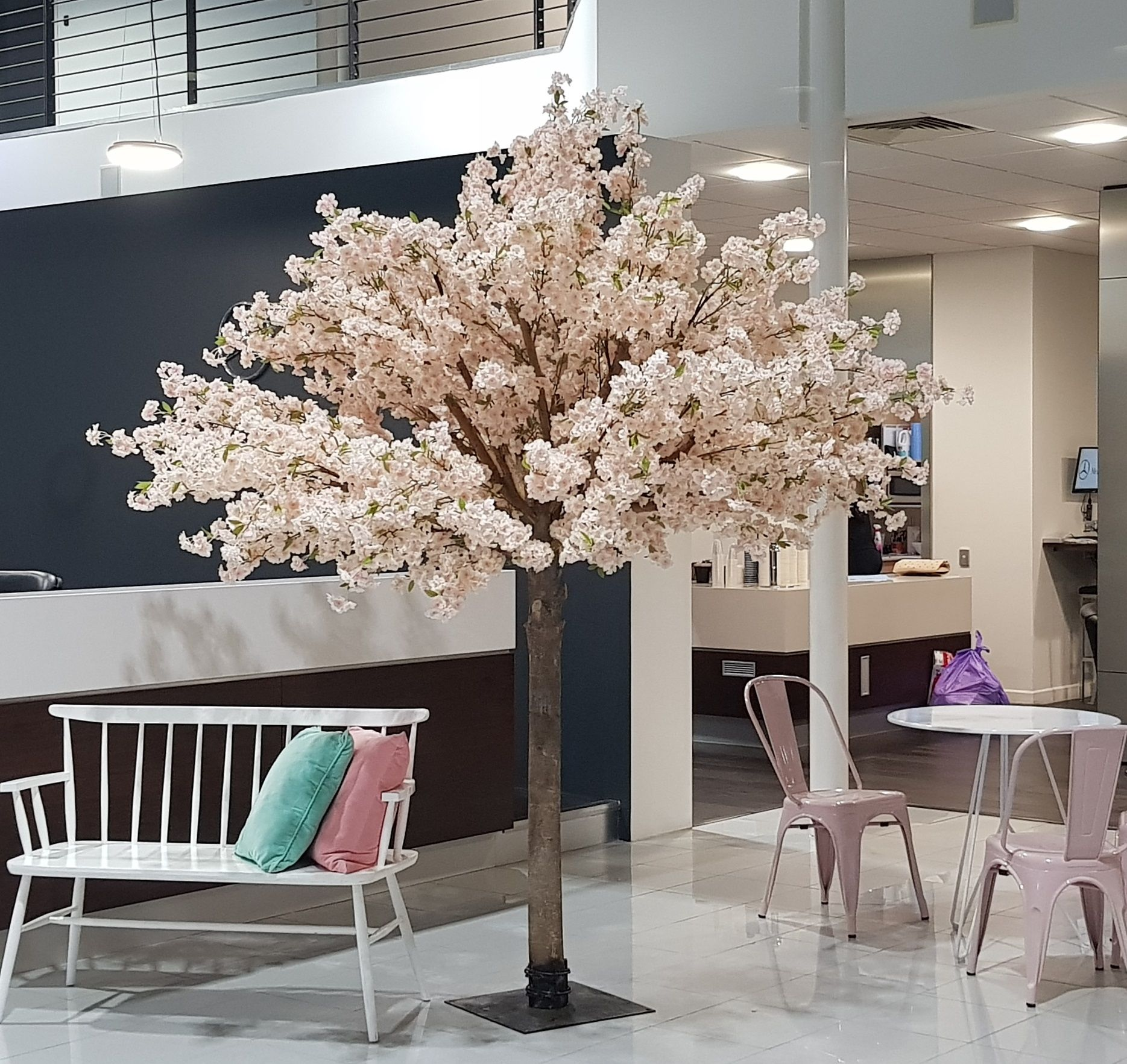 Our 2 5m High Upright Pink Cherry Blossom Trees Mercedesbenzgoldcoast Wedding Goldcoastwedd Pink Cherry Blossom Tree Insta Wedding Cherry Blossom Tree