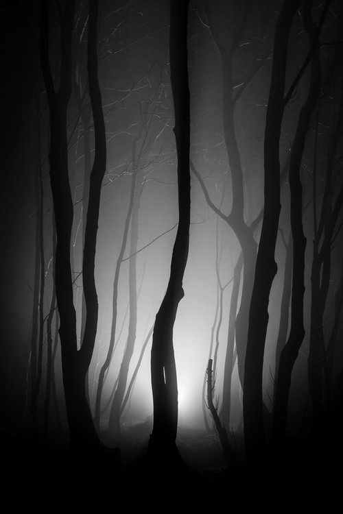 ☺iphone ios 7 wallpaper tumblr for ipad | Sombre forêt, Photographe nature et Paysage