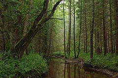 61% of Estonia's territory is covered by forests.