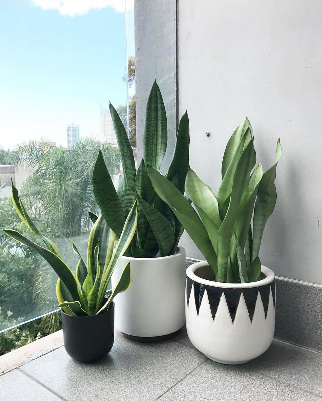 Bathroom Plants Bunnings – TRENDECORS