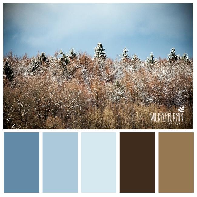 #Farbpalette, #kühl, Gedeckt, #winter, Winterwald
