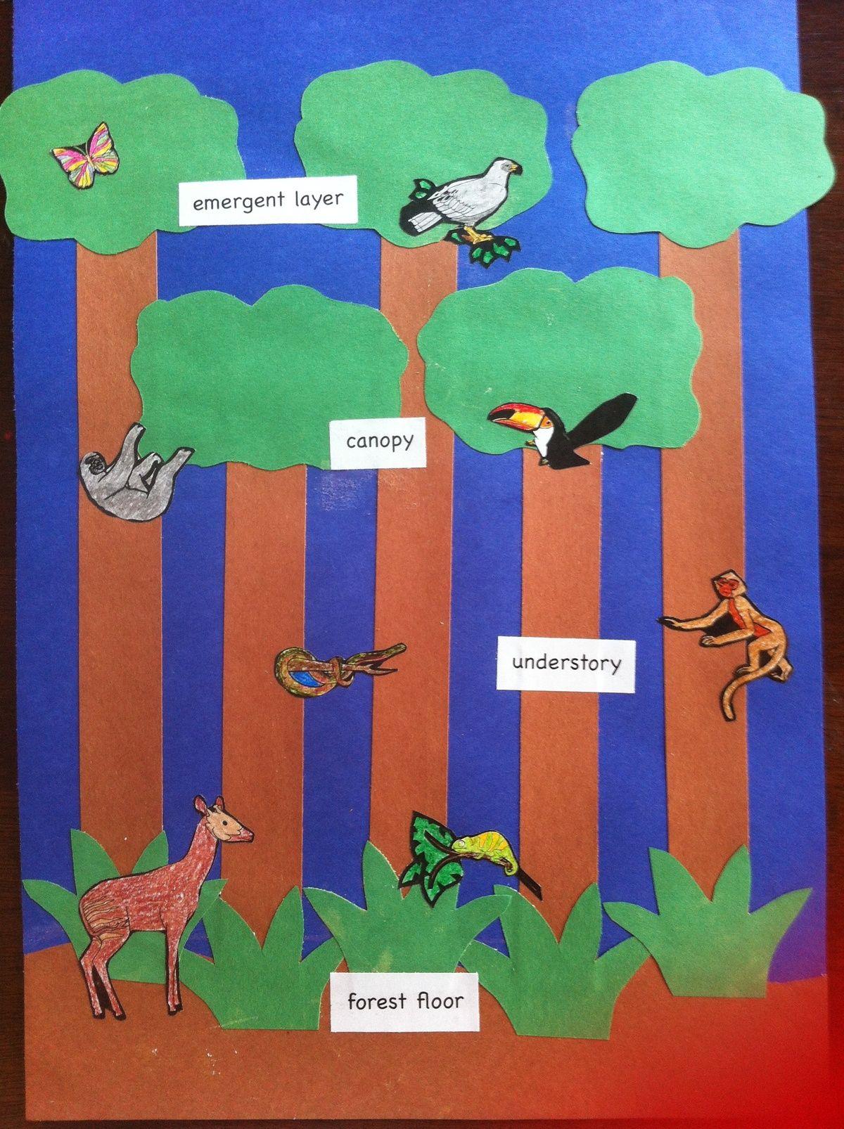 Pin by Kelly Simpson on Jungle Unit | Rainforest preschool
