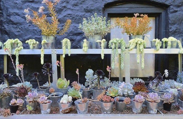 Veddw jardim no País de Gales; Gardenista