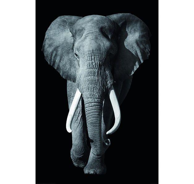Elefant Poster Kings Of Nature Hier Bei Www Closeup De