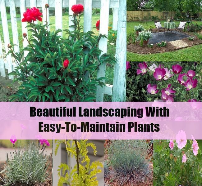 Beautiful Landscaping With Easy To Maintain Plants Happy Craft