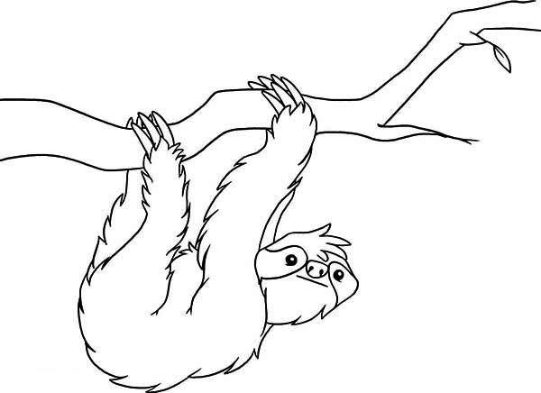 Sloth Sloth Coloring Page For Kids Sloth Coloring Page For