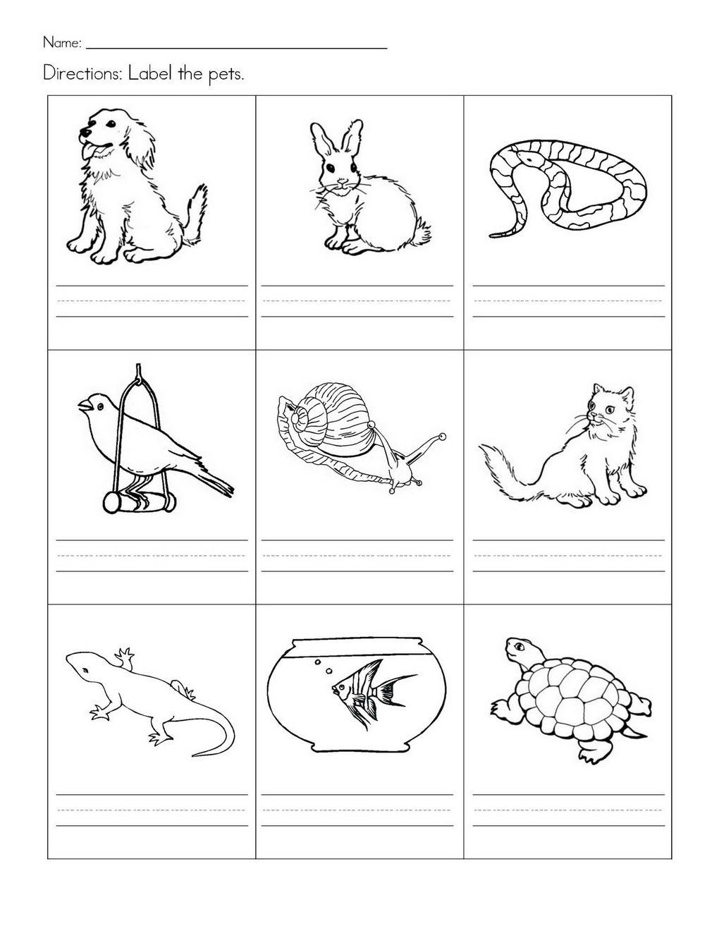 Kenneth Cole Pets Preschool Theme Pets Preschool Kindergarten Worksheets [ 1320 x 1020 Pixel ]