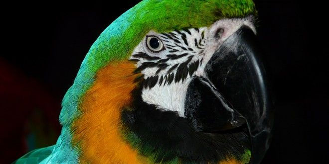 56 percent of all parrot species are in decline