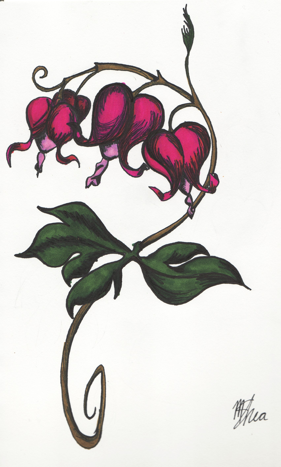 Bleeding+Heart+Flowers Heart flower tattoo, Bleeding