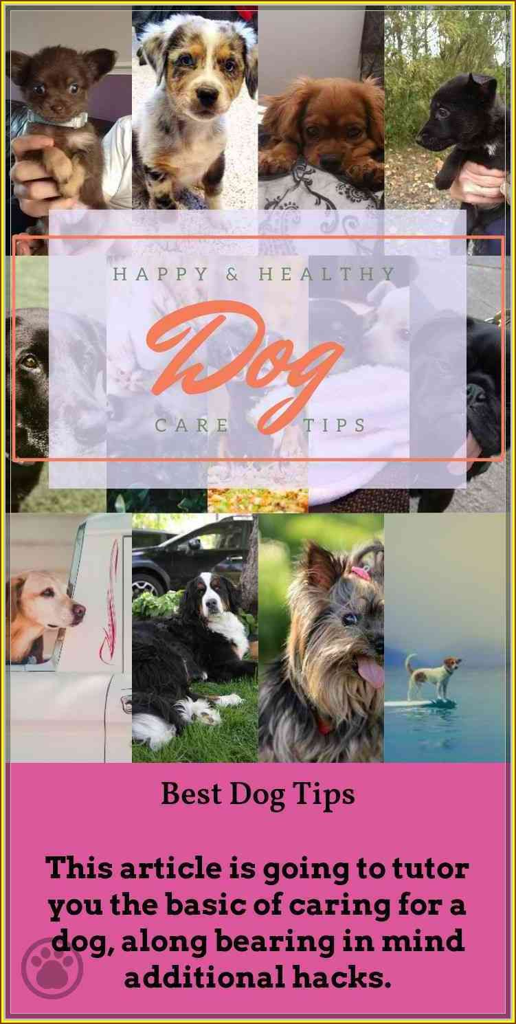 Tips You Should Know When Dealing With Dogs Dogs, Dog