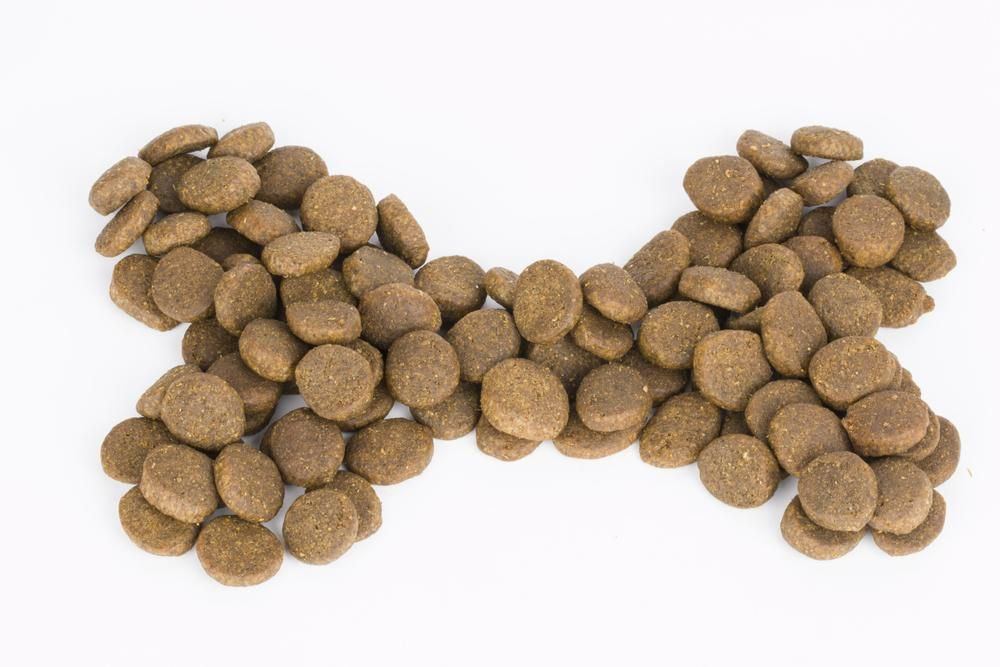 Top reasons why you should be avoiding grains in dog food