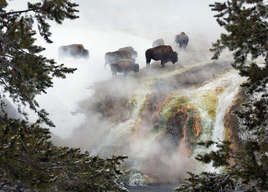 Yellowstone by SheltieBoy