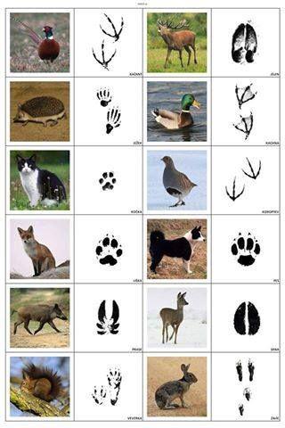 Eläimiä jälkineen.