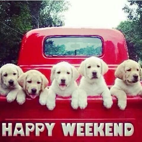 Happy weekend from the puppies | Days of weeks, welcomes ...