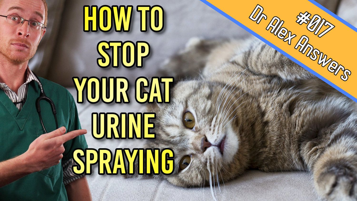 If your cat is spraying on the furniture or urinating