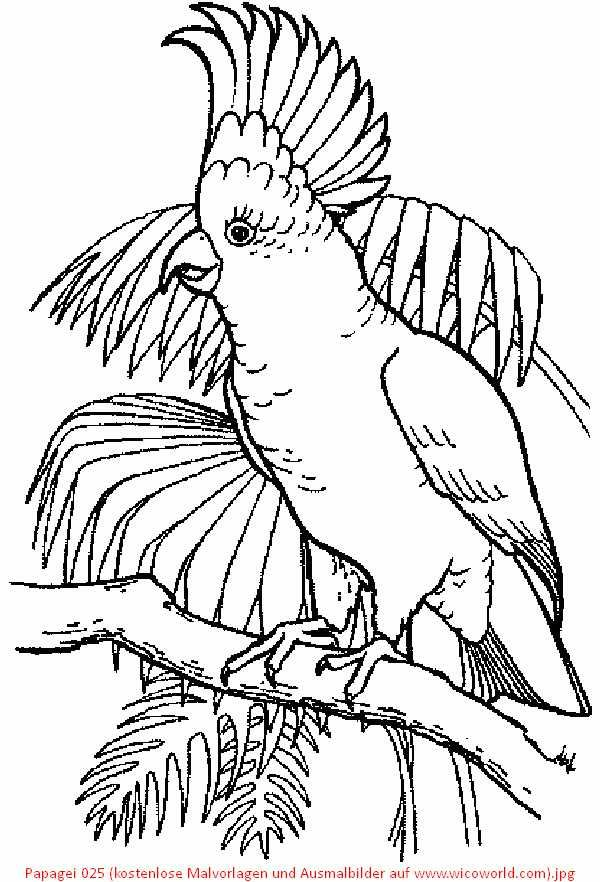 papagei 025 (kostenlose malvorlagen und ausmalbilder auf