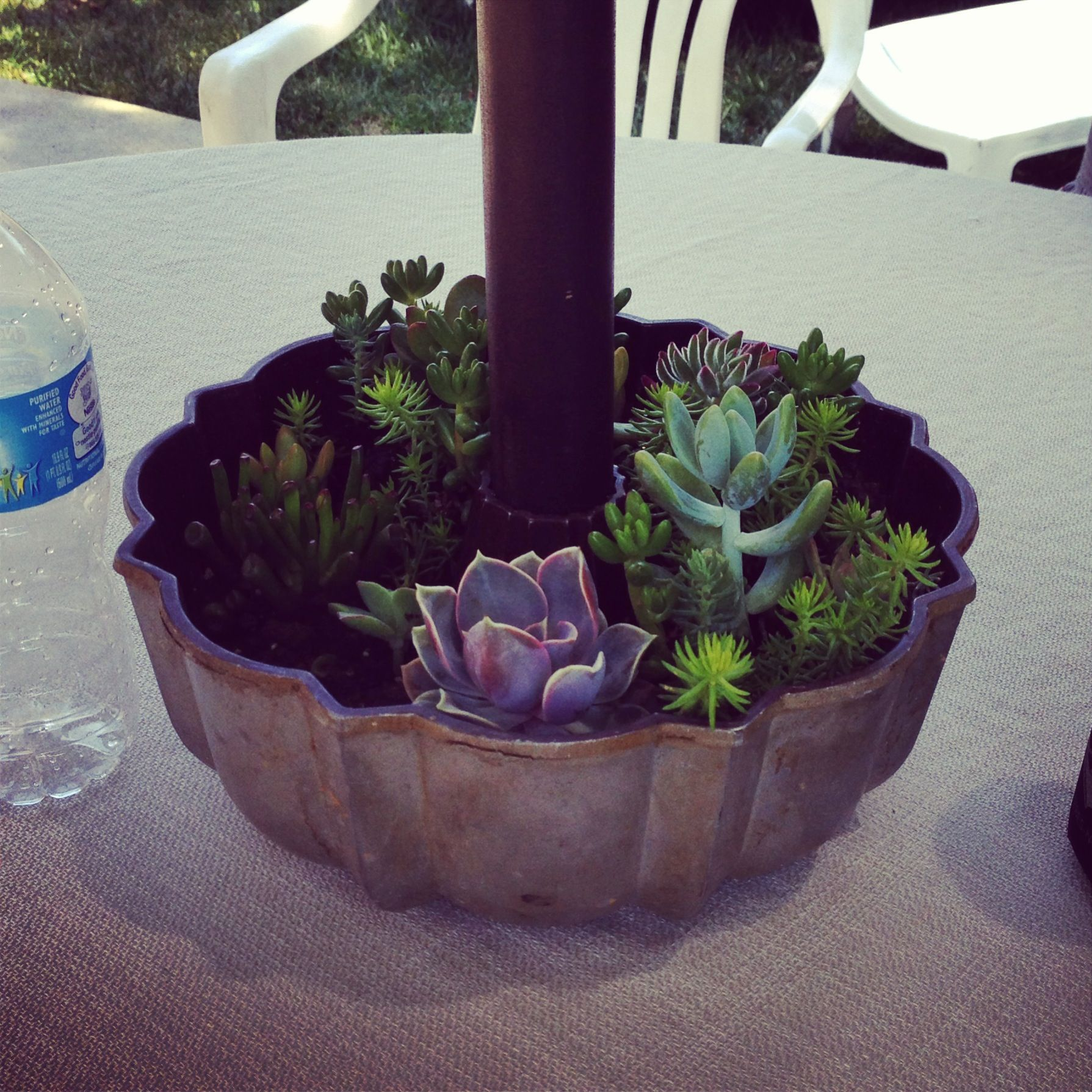 An Old Bundt Cake Pan Is Perfect For Succulents Around An