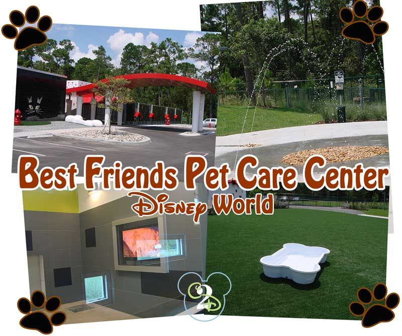 Disney World Training Best Friends Pet Care Center Best Friends