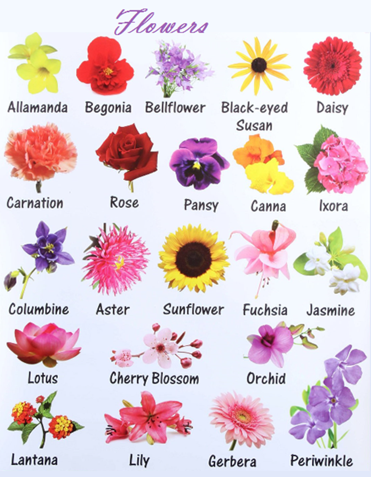 Learn English Vocabulary through Pictures: Flowers and Plants ...