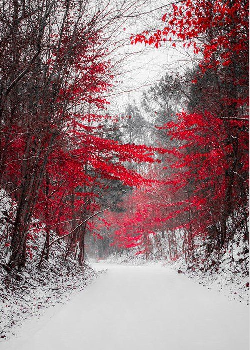 Red Blossoms Greeting Card for Sale by Parker Cunningham #winterlandscape