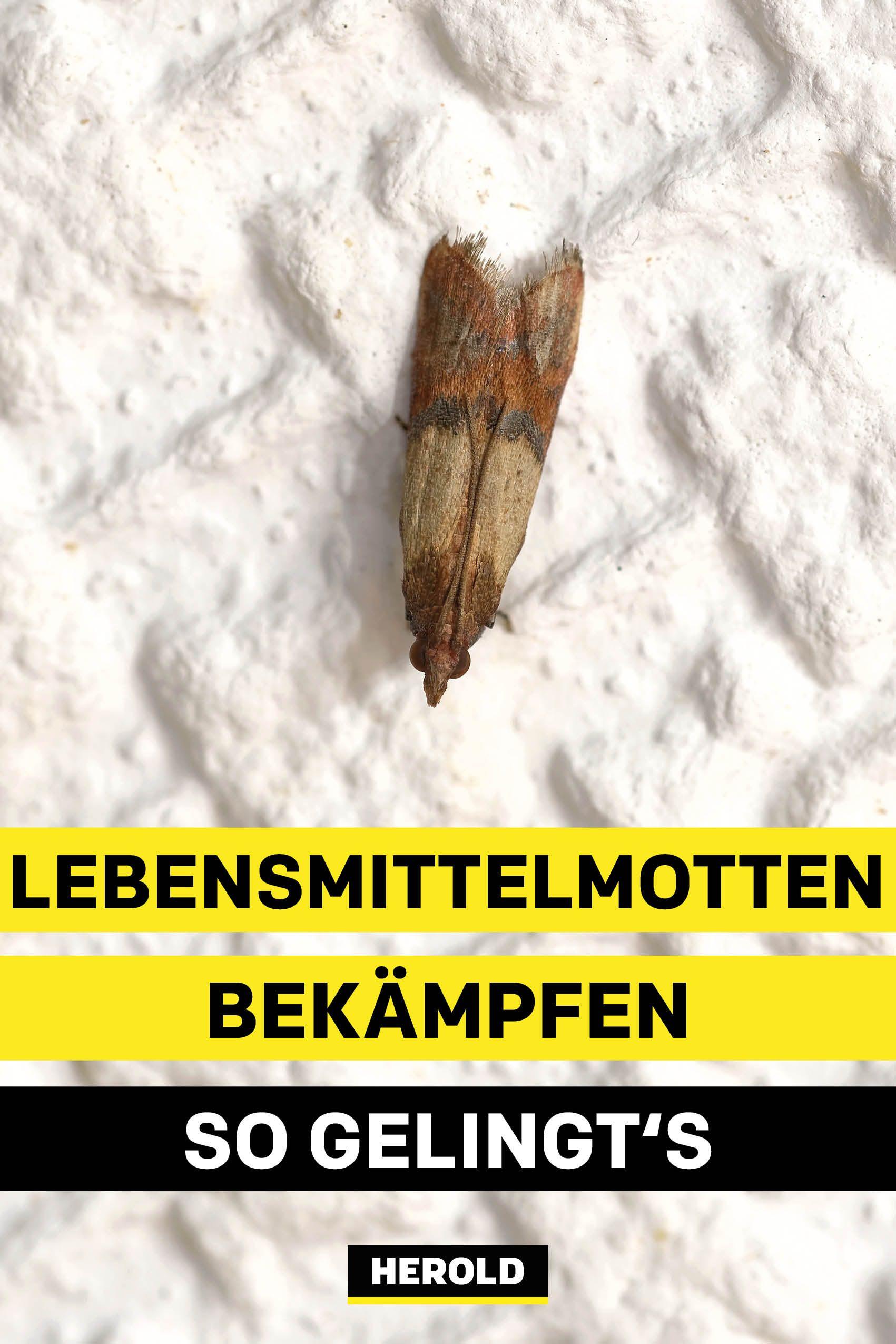 Lebensmittelmotten Bekampfen So Gelingt S Lebensmittelmotten Lebensmittel Motten Bekampfen Motten In Der Kuche