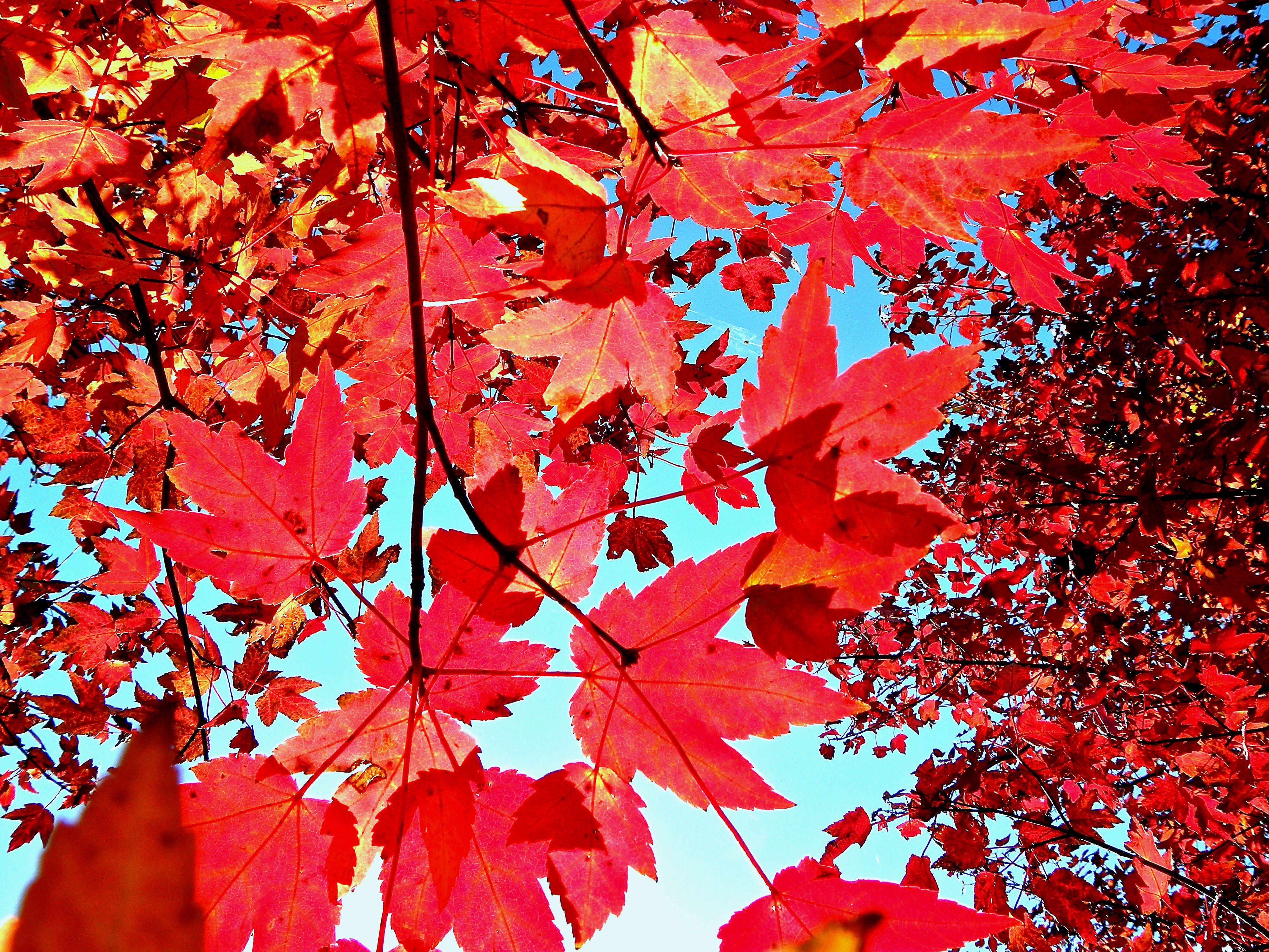 Autumn Leaves Background Tumblr wallpaper. Folhas de