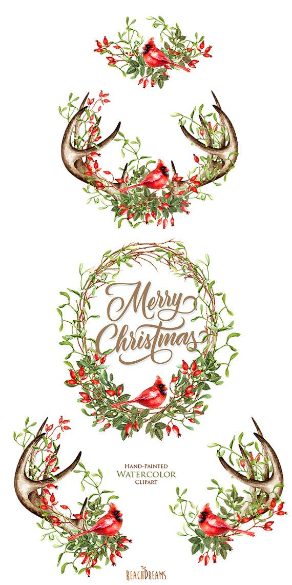 Watercolor Christmas Clipart Mistletoe Briar Red Cardinal