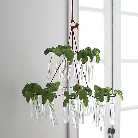Fish Chandelier in New Accessories | Crate and Barrel ...